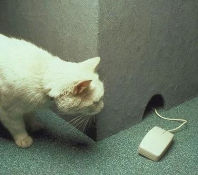 Mouse in the Wall